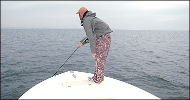 Chesapeake Bay Fly Fishing Trips