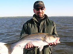 Chesapeake Bay Striped Bass