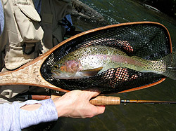 Gunpowder River Trout